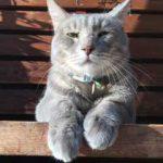ただ猫が好きなだけのブログ 第3話