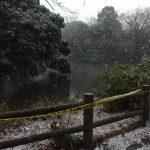和田堀公園の雪